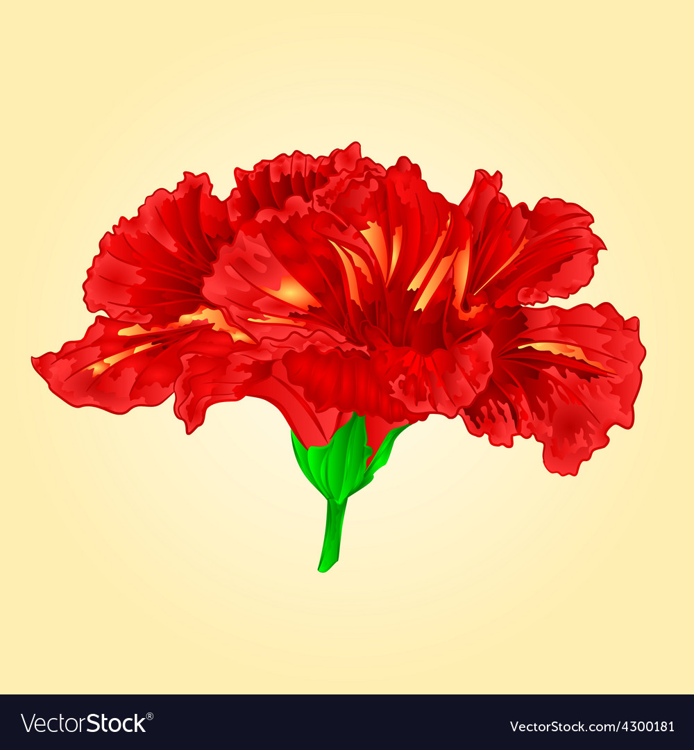 Flower red hibiscus blossom simple tropics flower vector | Price: 1 Credit (USD $1)