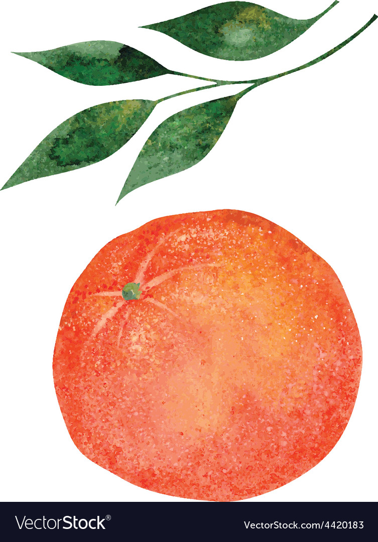Orange fruit vector | Price: 1 Credit (USD $1)