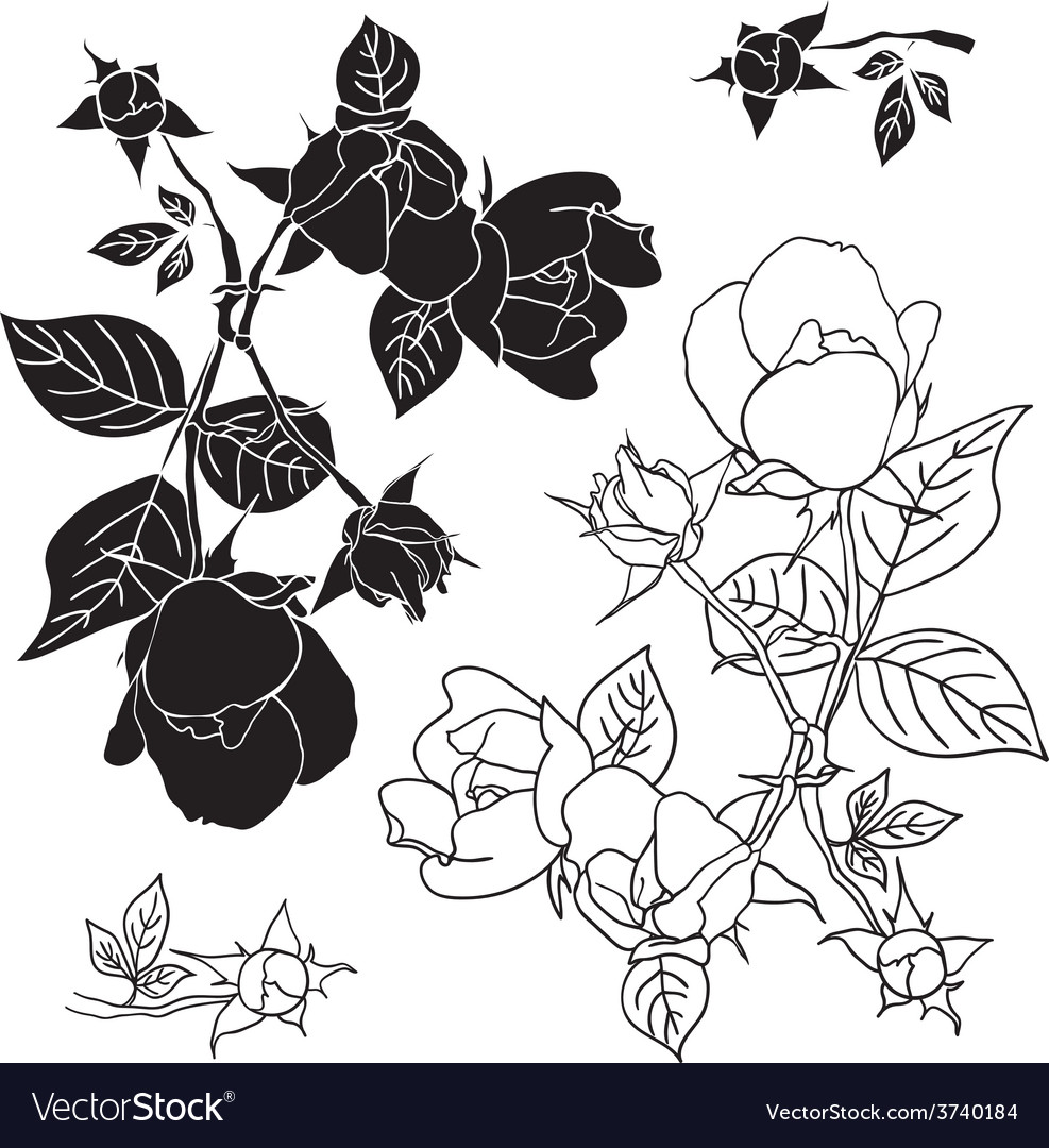 Four black and white roses vector | Price: 1 Credit (USD $1)