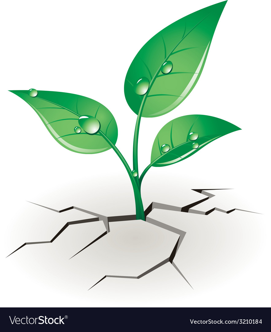 Growth sprout vector | Price: 1 Credit (USD $1)