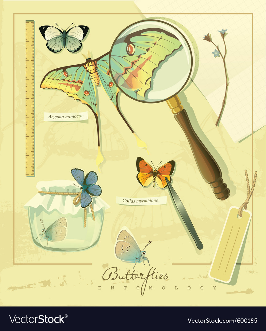 Butterflies entomology vector | Price: 3 Credit (USD $3)