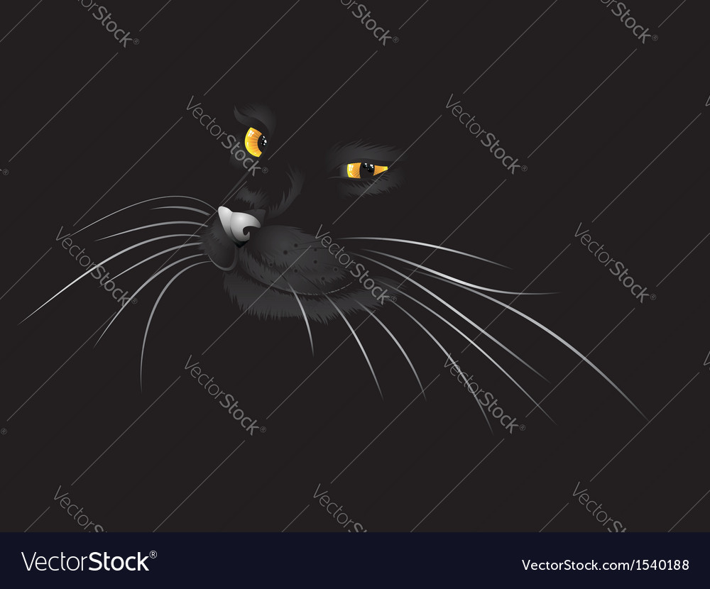 Black cat in the dark3 vector | Price: 1 Credit (USD $1)