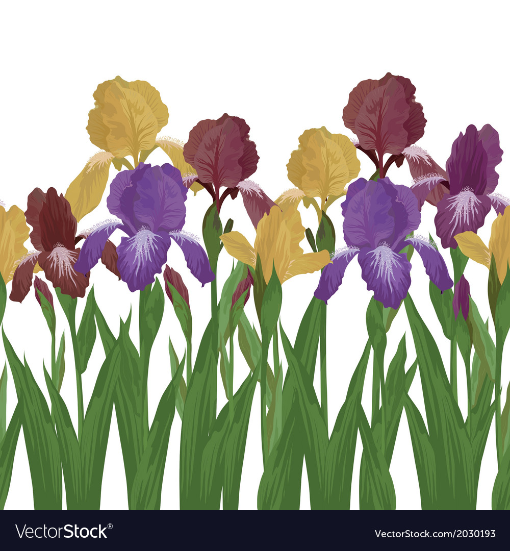 Flowers iris seamless vector | Price: 1 Credit (USD $1)
