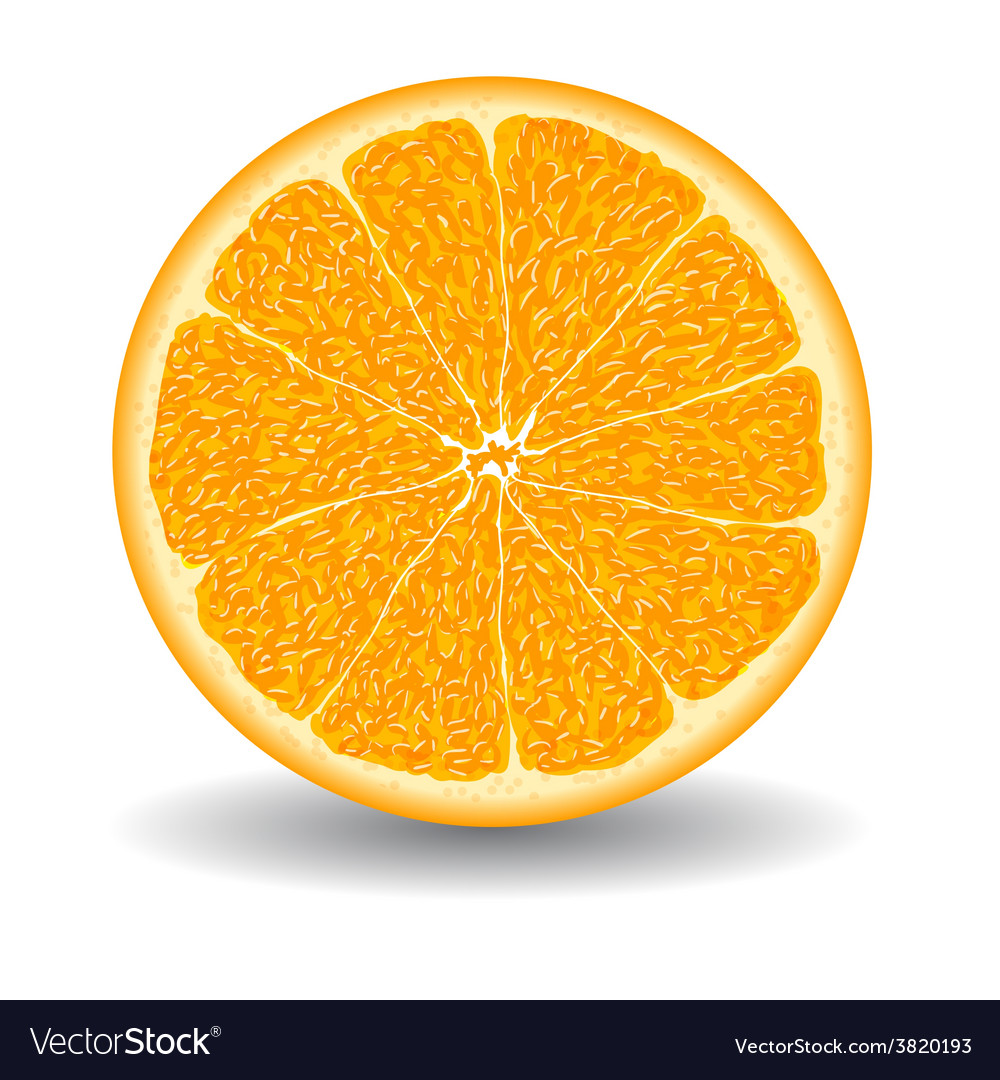 Oranges slice over white vector | Price: 1 Credit (USD $1)
