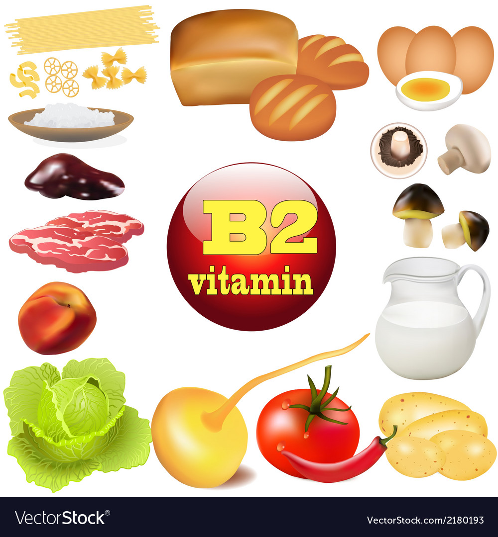 Two vitamin b in plant vector | Price: 1 Credit (USD $1)
