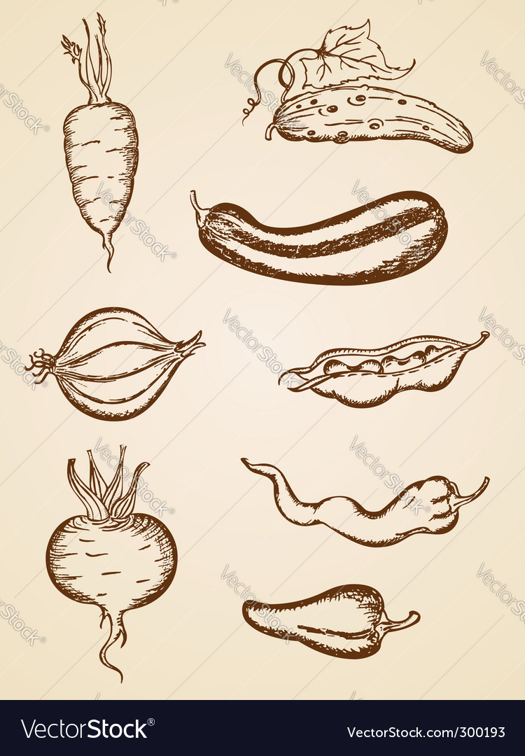 Vintage vegetables set vector | Price: 1 Credit (USD $1)