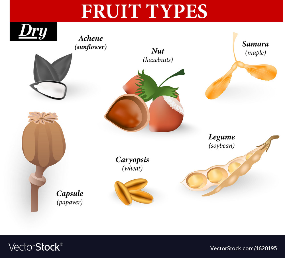 Types of simple fruit vector | Price: 1 Credit (USD $1)