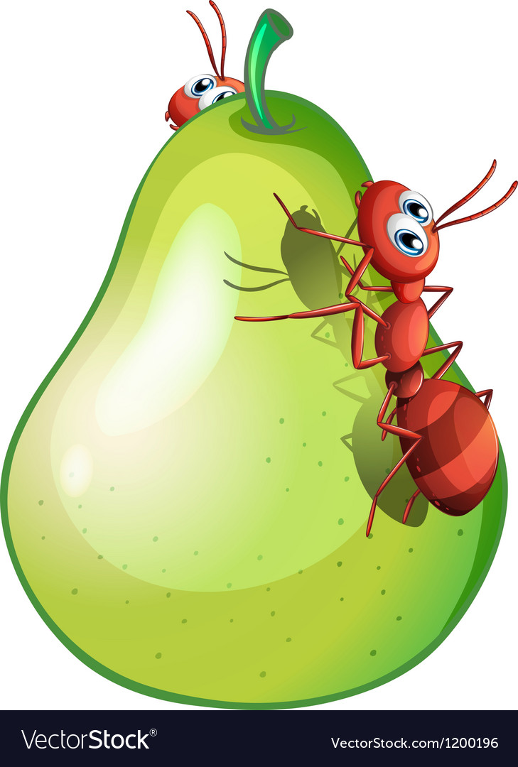 A pear with two ants vector | Price: 1 Credit (USD $1)