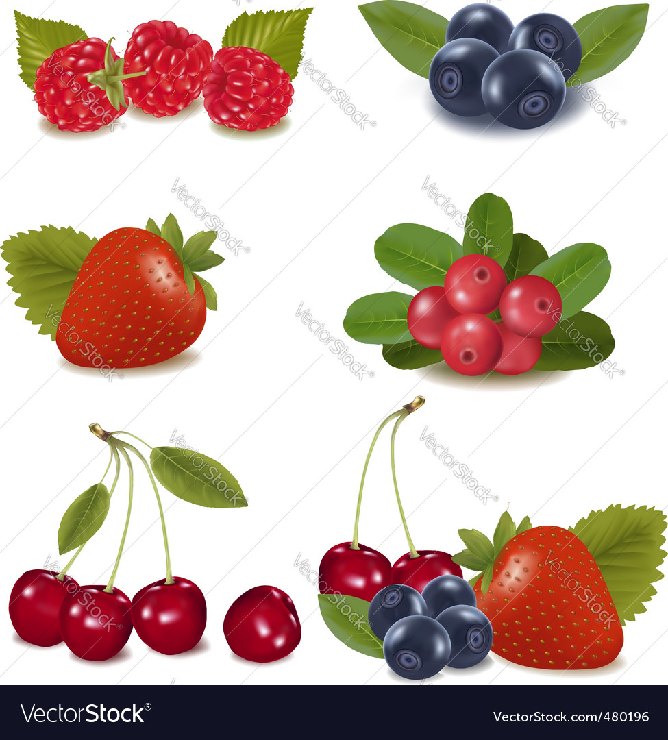Collection with berries and cherries vector | Price: 3 Credit (USD $3)