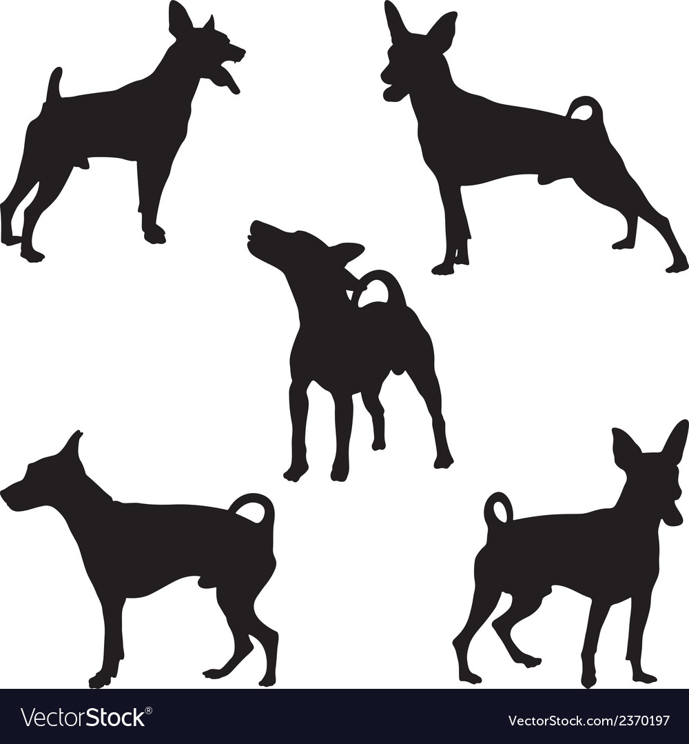 Miniature pinscher vector | Price: 1 Credit (USD $1)