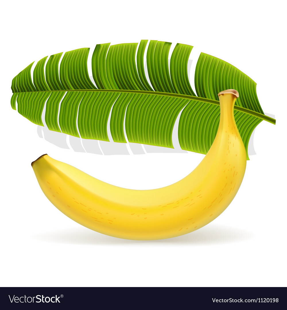 Ripe yellow banana with leaf vector | Price: 1 Credit (USD $1)