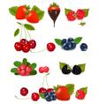 Berries and cherries vector