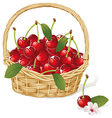 Cherry basket vector