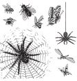 Set of antique insects engravings vector