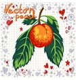 Fresh peach with leaves vector