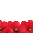 Red hibiscus flowers border vector