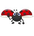 Cute ladybug cartoon flying vector