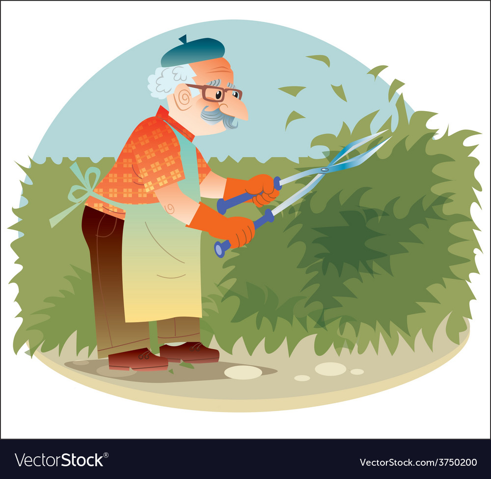 The old gardener working in the garden cutting the vector | Price: 1 Credit (USD $1)