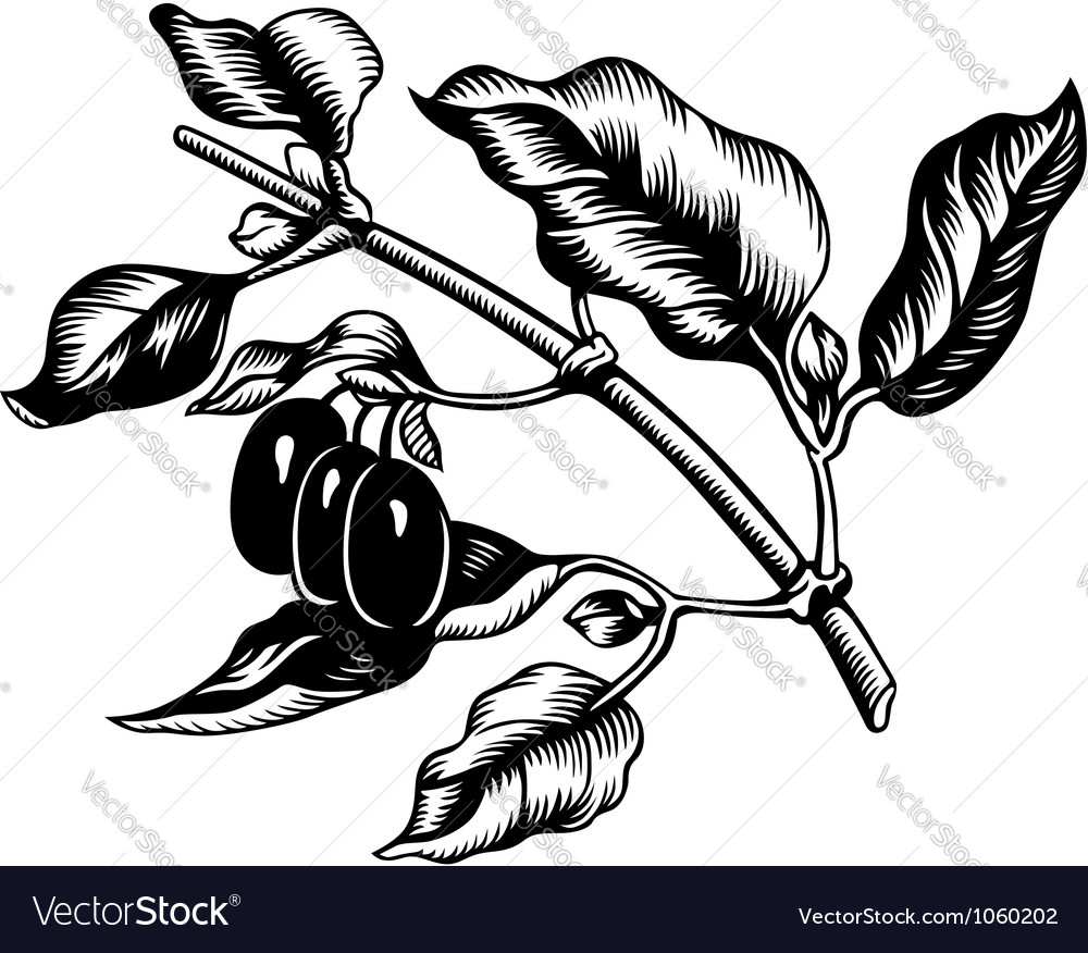Cornus mas vector | Price: 1 Credit (USD $1)