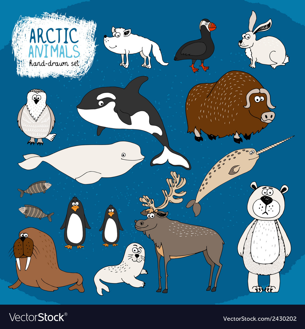 Set of hand-drawn arctic animals vector | Price: 1 Credit (USD $1)