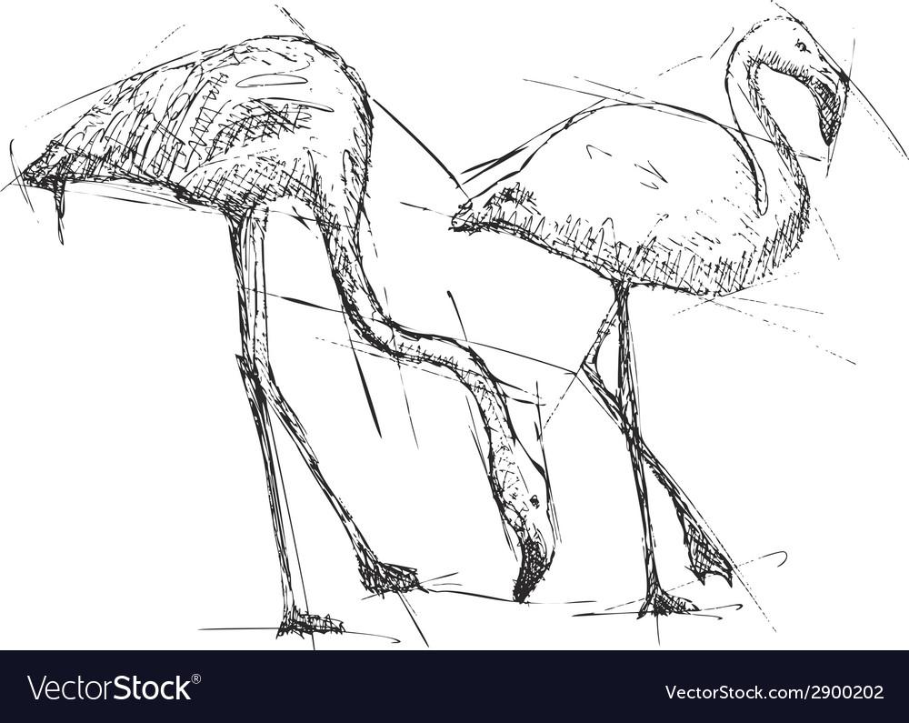 Sketch of flamingos vector | Price: 1 Credit (USD $1)