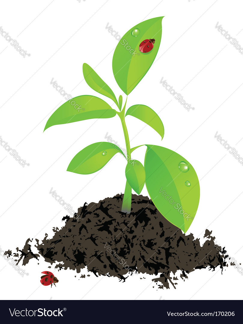 Young green plant and ladybird vector | Price: 1 Credit (USD $1)
