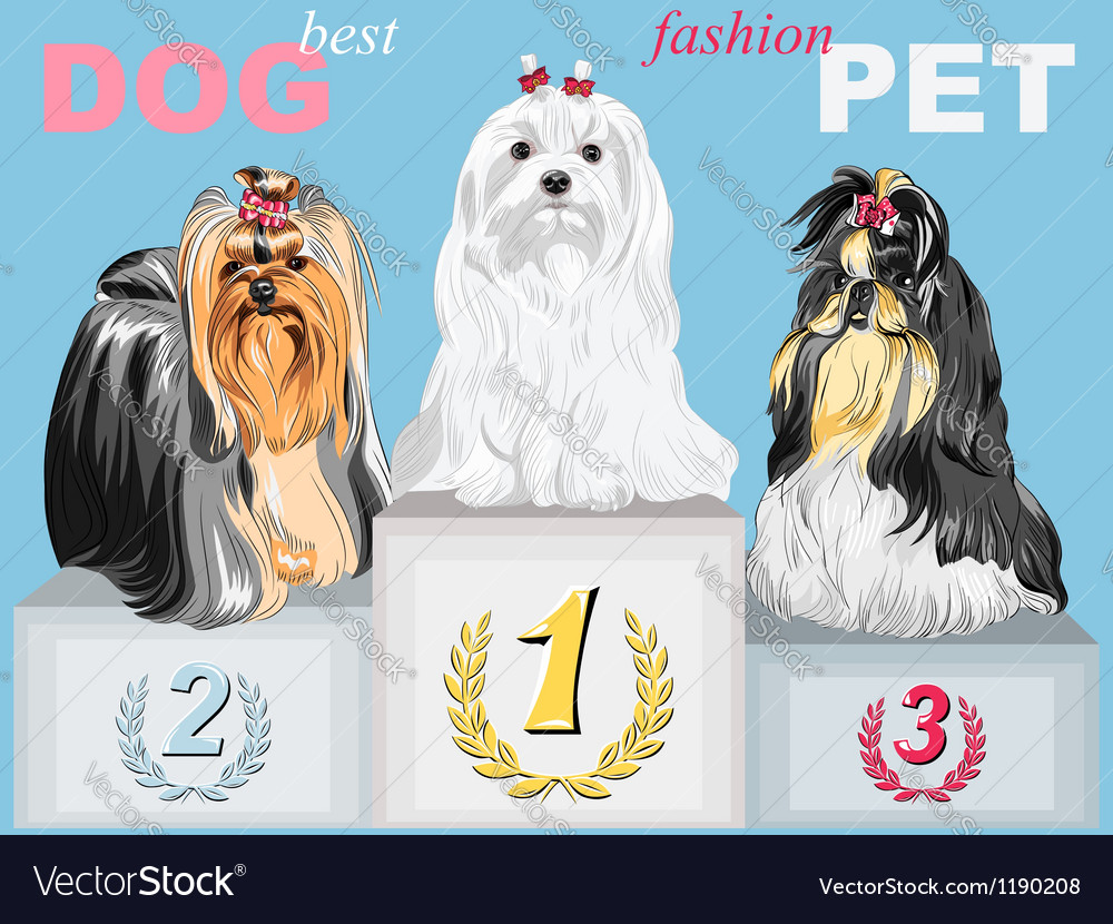 Fashion dog champion on the podium vector | Price: 3 Credit (USD $3)
