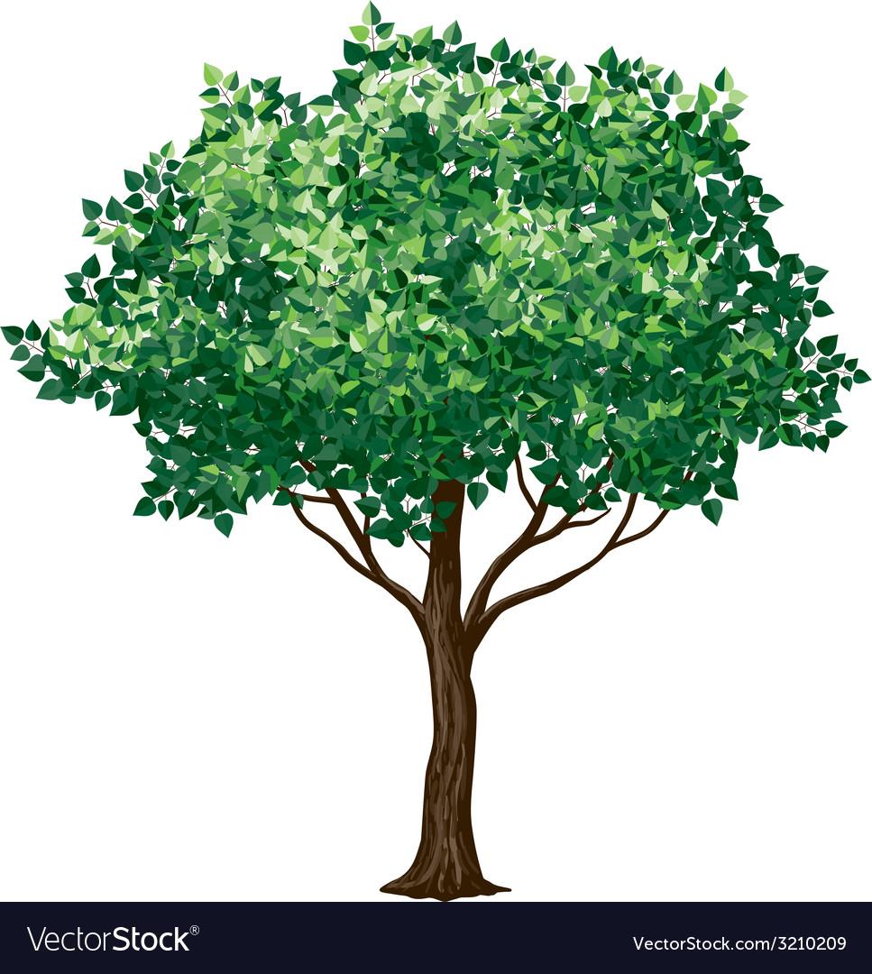 Foliage tree vector | Price: 1 Credit (USD $1)