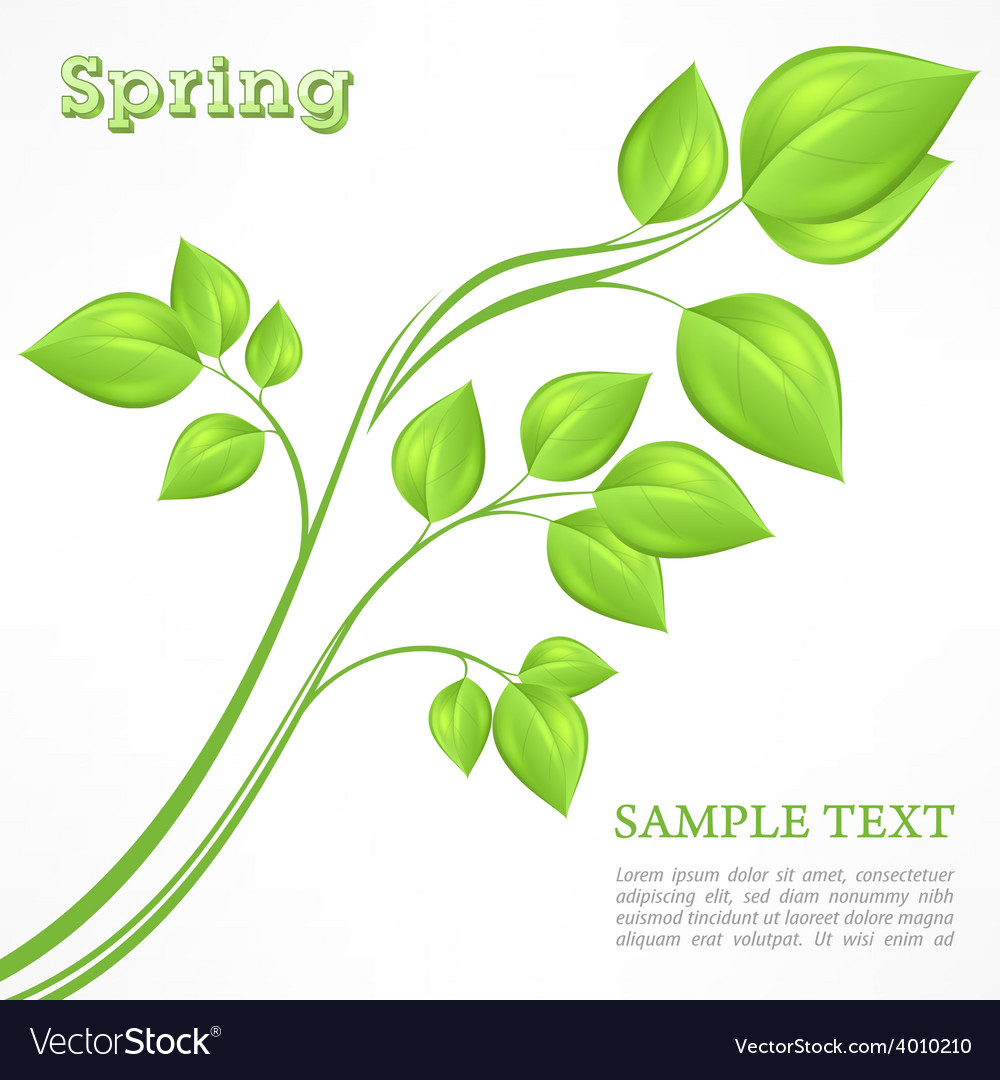 Spring branch with green vector | Price: 1 Credit (USD $1)