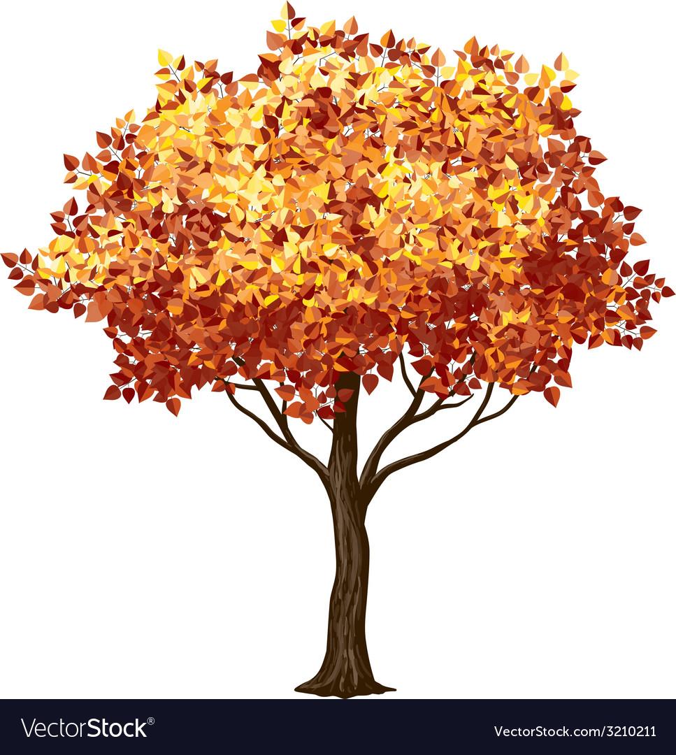 Fall tree vector | Price: 1 Credit (USD $1)
