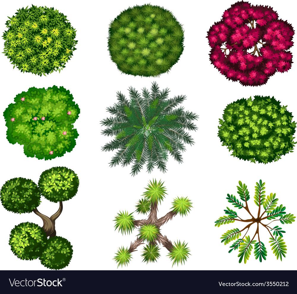 Top tree vector | Price: 1 Credit (USD $1)