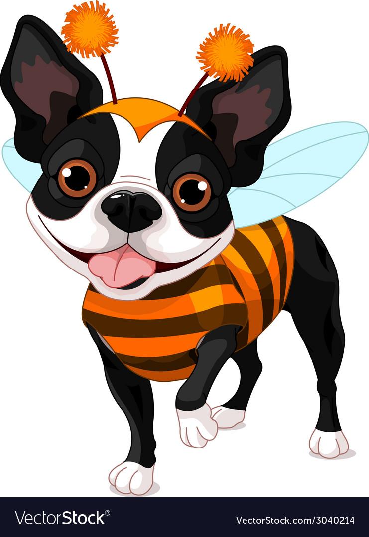 Halloween boston terrier vector | Price: 1 Credit (USD $1)