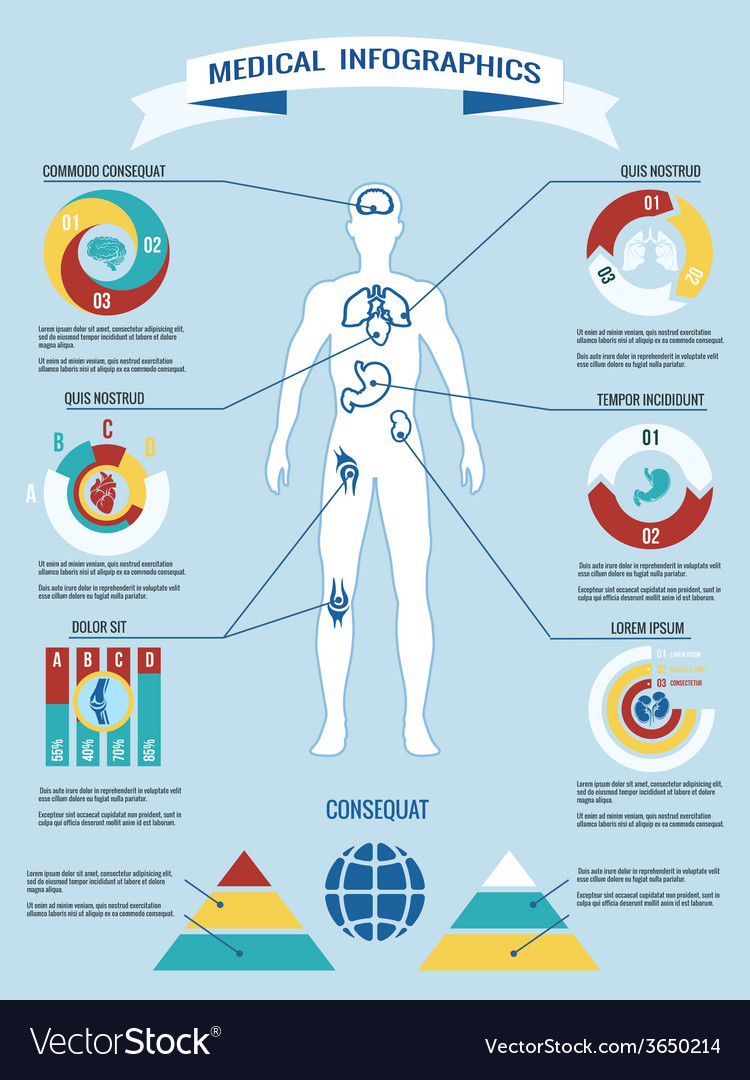 Human body medical infographics vector | Price: 1 Credit (USD $1)