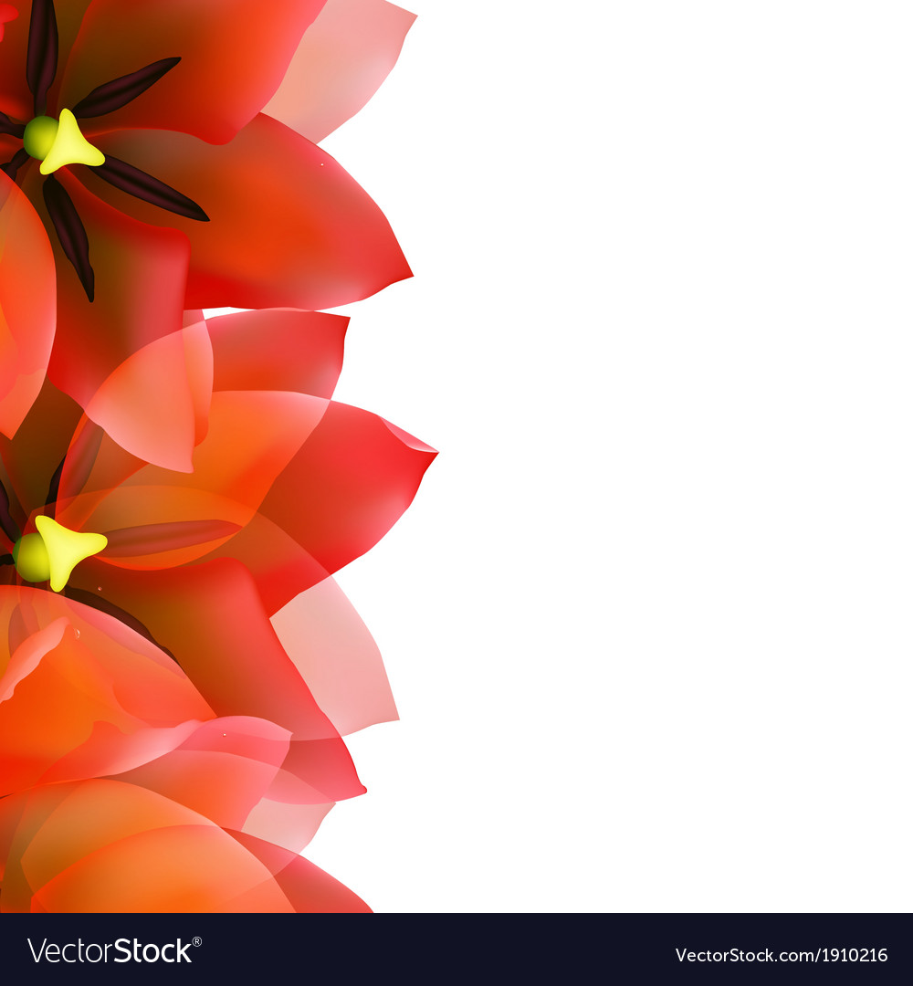 Red tulip border with water drops vector | Price: 1 Credit (USD $1)