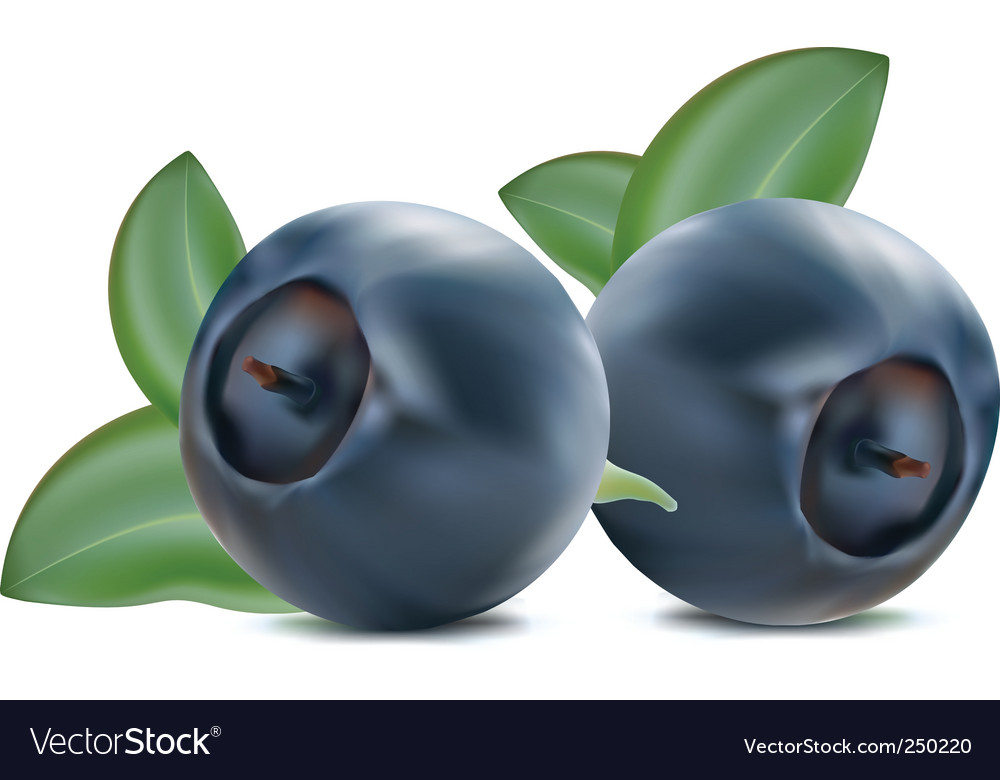 Blueberry vector | Price: 3 Credit (USD $3)