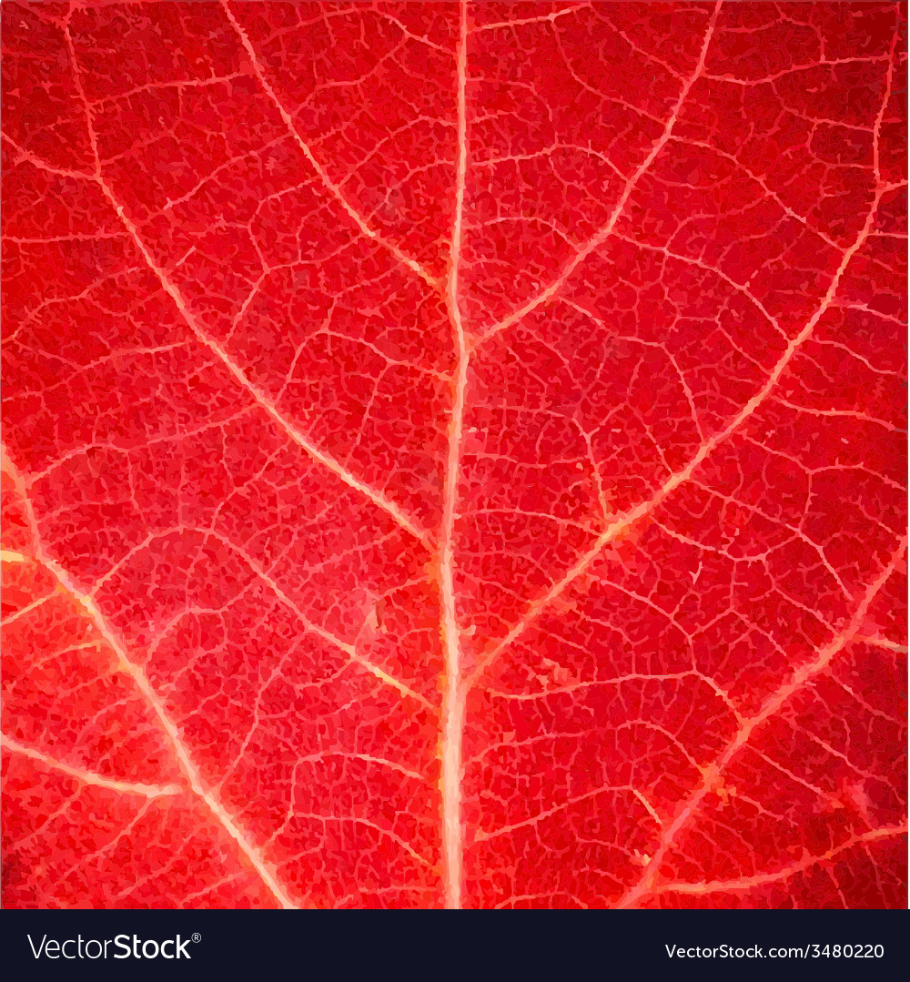 Red leaf texture vector | Price: 1 Credit (USD $1)