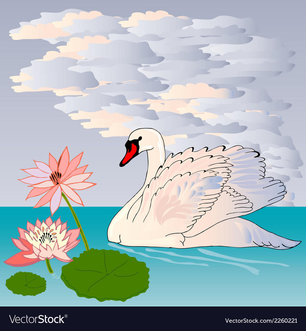 Graceful and graceful swan vector | Price: 1 Credit (USD $1)