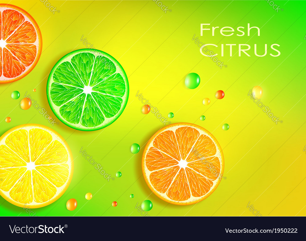 Orange lemon lime and grapefruit vector | Price: 1 Credit (USD $1)