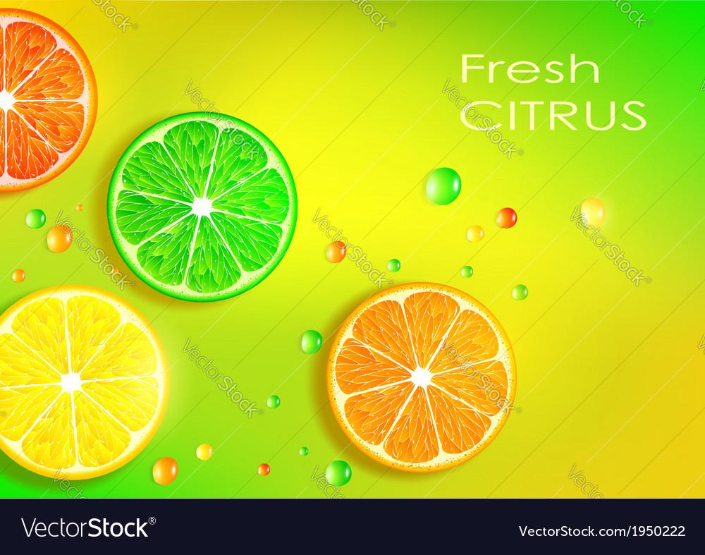Orange lemon lime and grapefruit vector | Price: 1 Credit (USD $1)