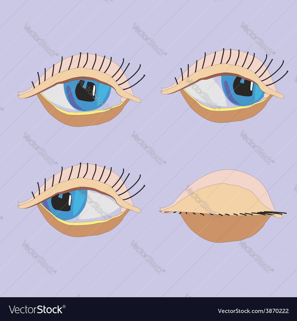 Set eyes vector | Price: 1 Credit (USD $1)
