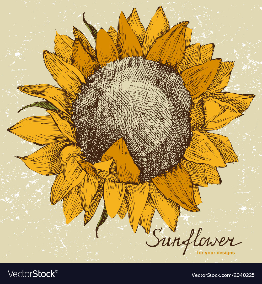 Sunflower fower vector | Price: 1 Credit (USD $1)