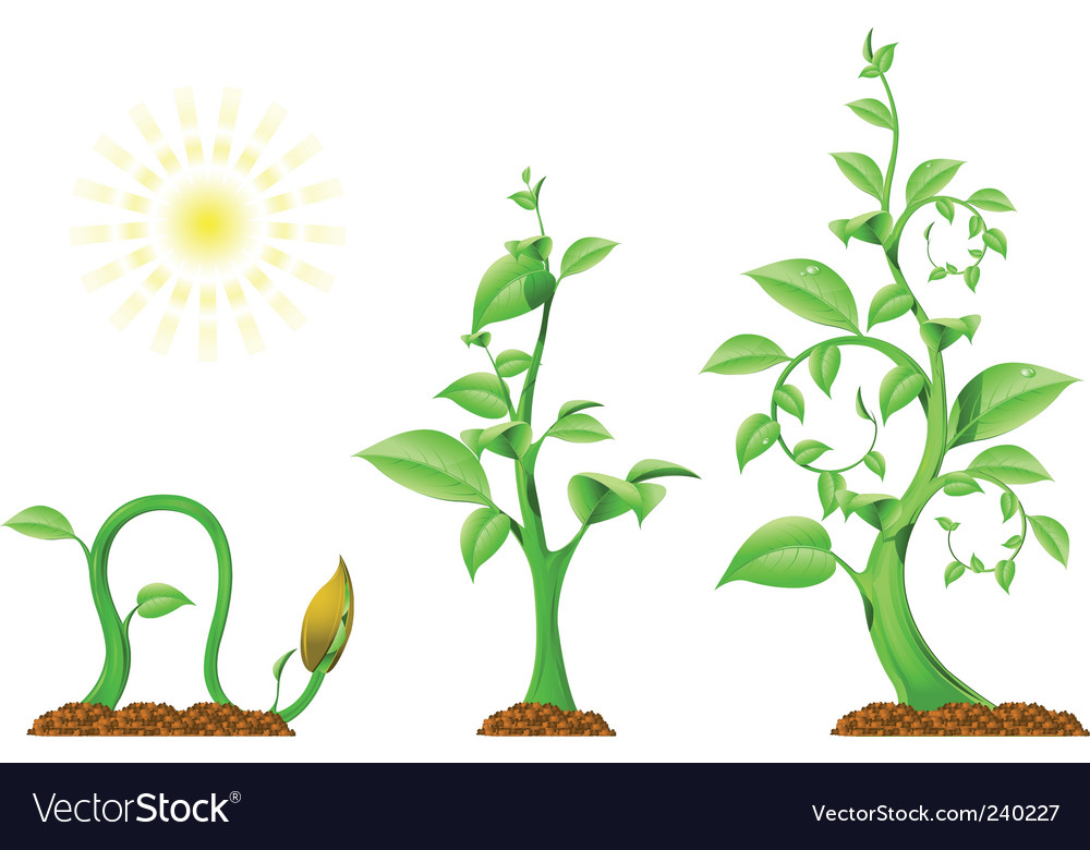 Plant growth vector | Price: 3 Credit (USD $3)