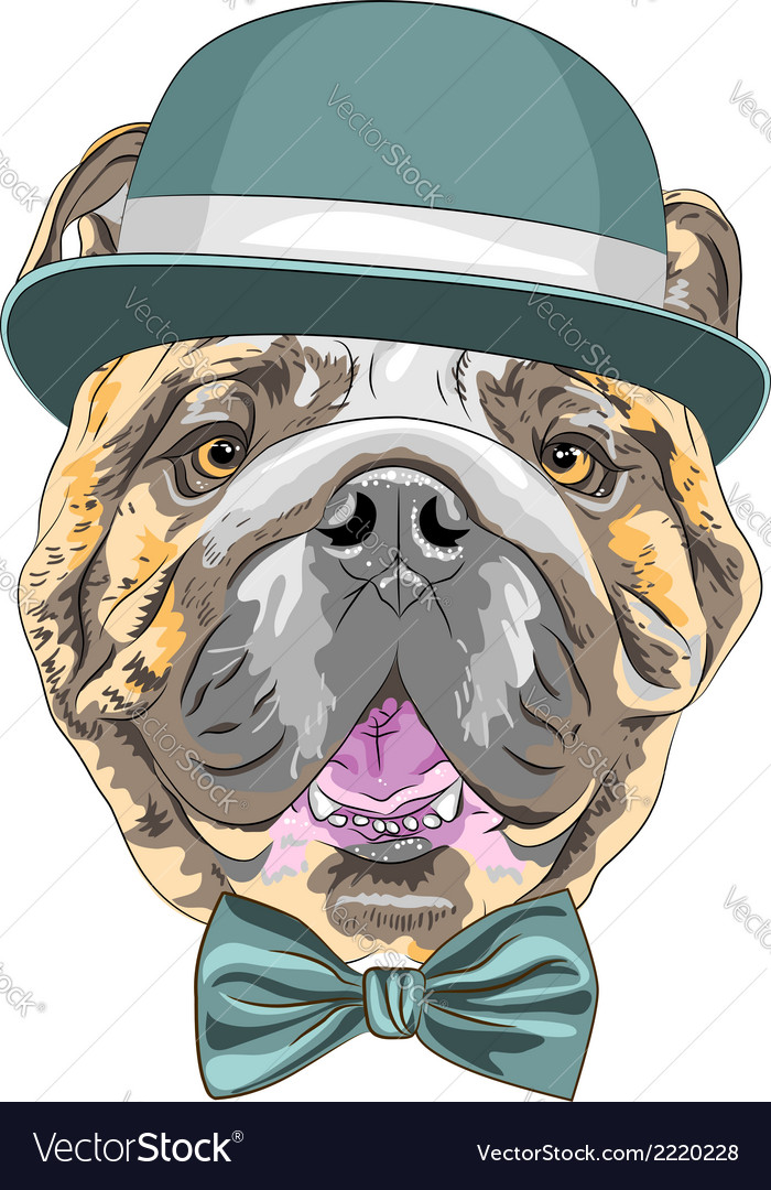 Hipster dog english bulldog breed vector | Price: 1 Credit (USD $1)