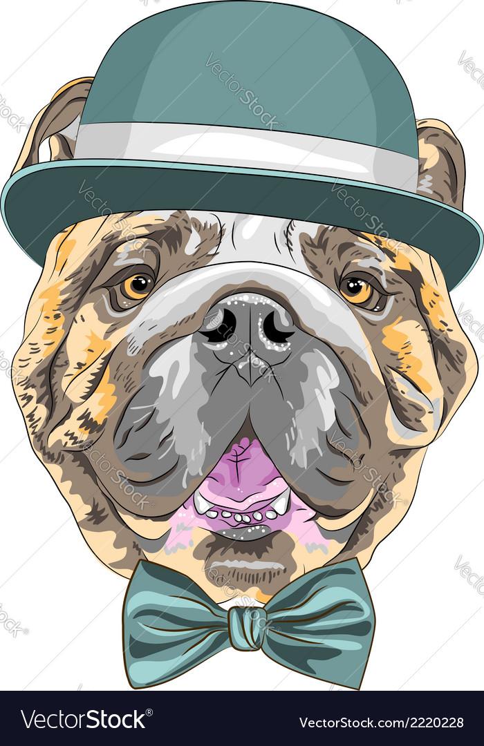 Hipster dog english bulldog breed vector | Price: 1 Credit (USD $1)