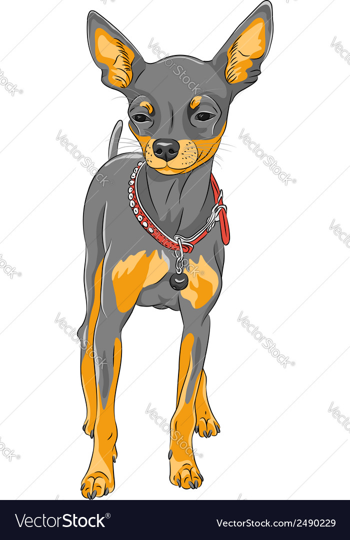 Cute serious dog chihuahua vector | Price: 1 Credit (USD $1)