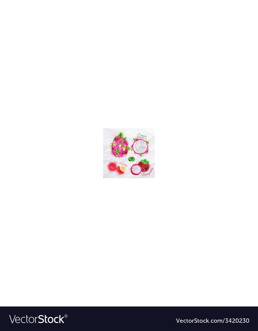 Exotic fruit watercolor dragon fruit rambutan vector | Price: 1 Credit (USD $1)