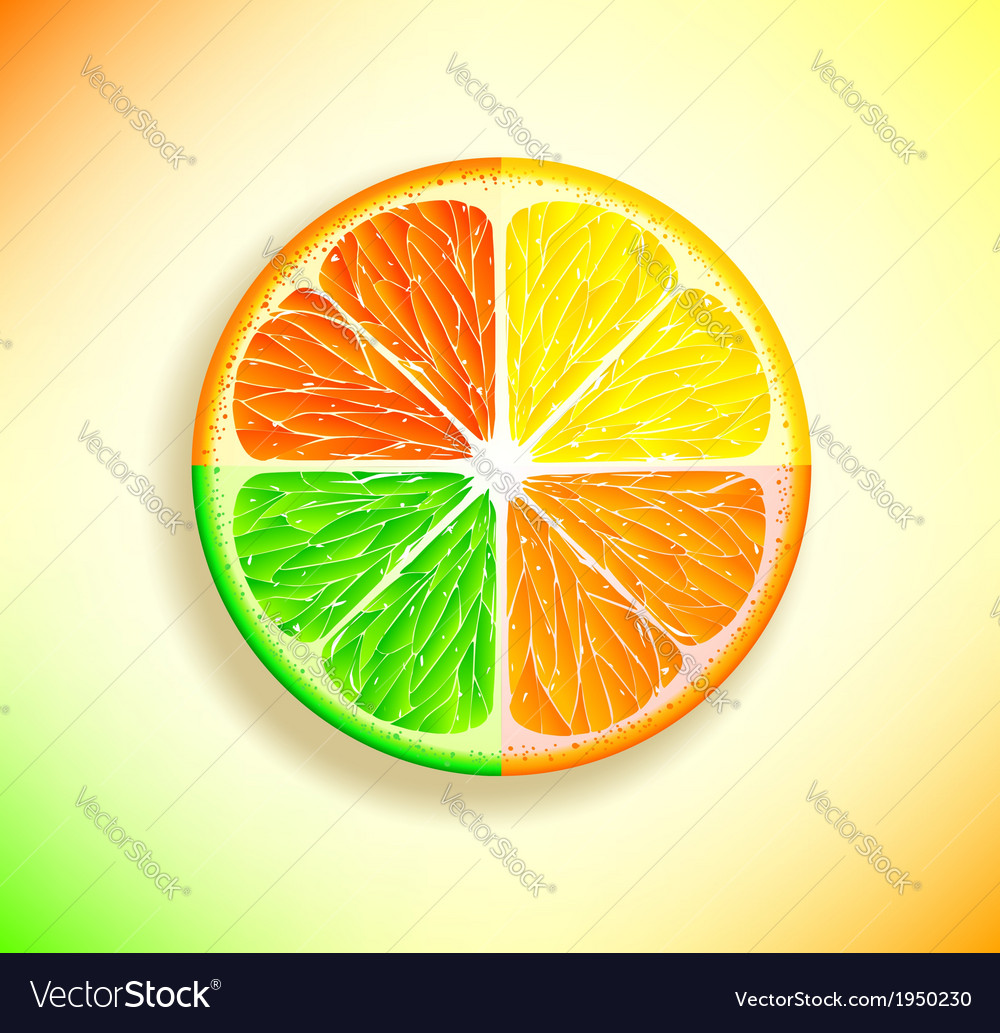 Lemon orange lime and grapefruit vector | Price: 1 Credit (USD $1)