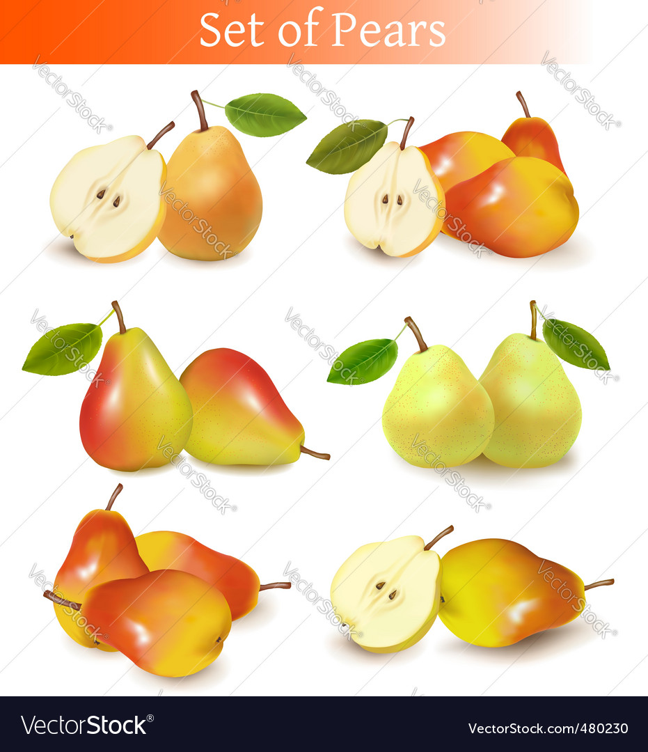 Set of pears vector | Price: 3 Credit (USD $3)