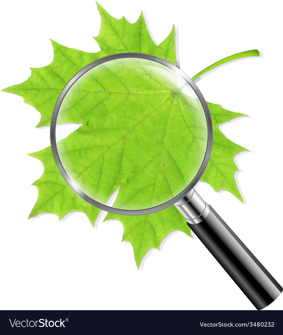 Magnifing glass with green leaf vector | Price: 1 Credit (USD $1)