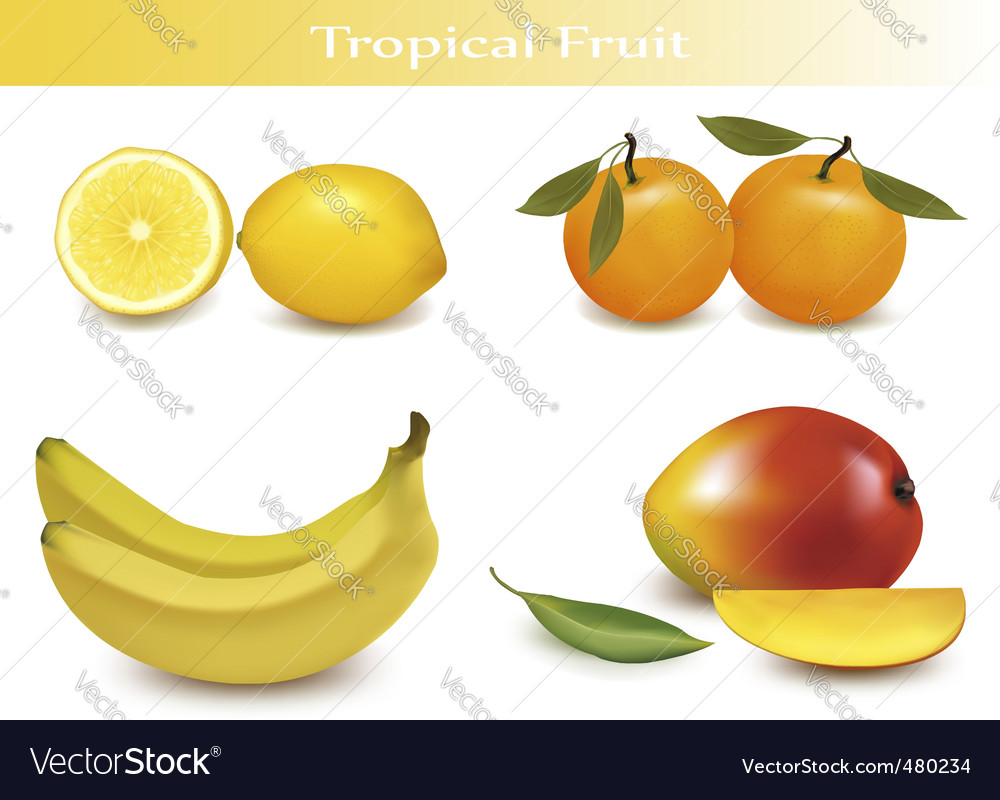 Set of tropical fruit vector | Price: 3 Credit (USD $3)